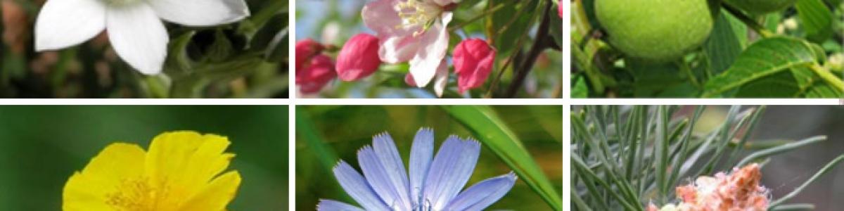 Bach-flower-header